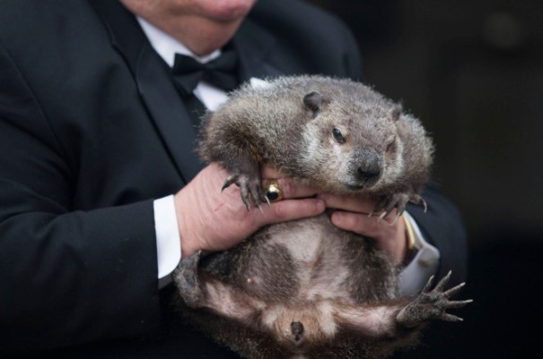 groundhog_day-chuck