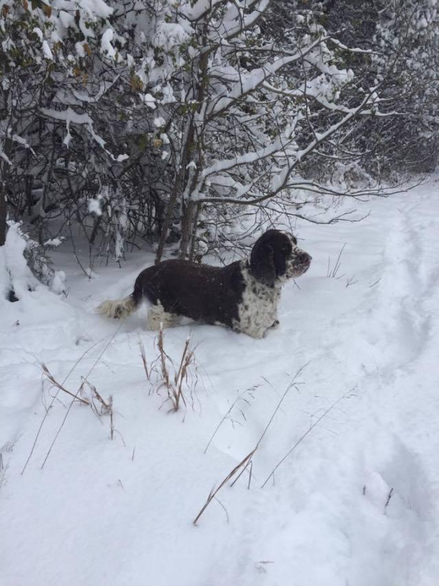 java-snow