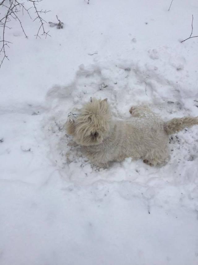 morris-snow-1